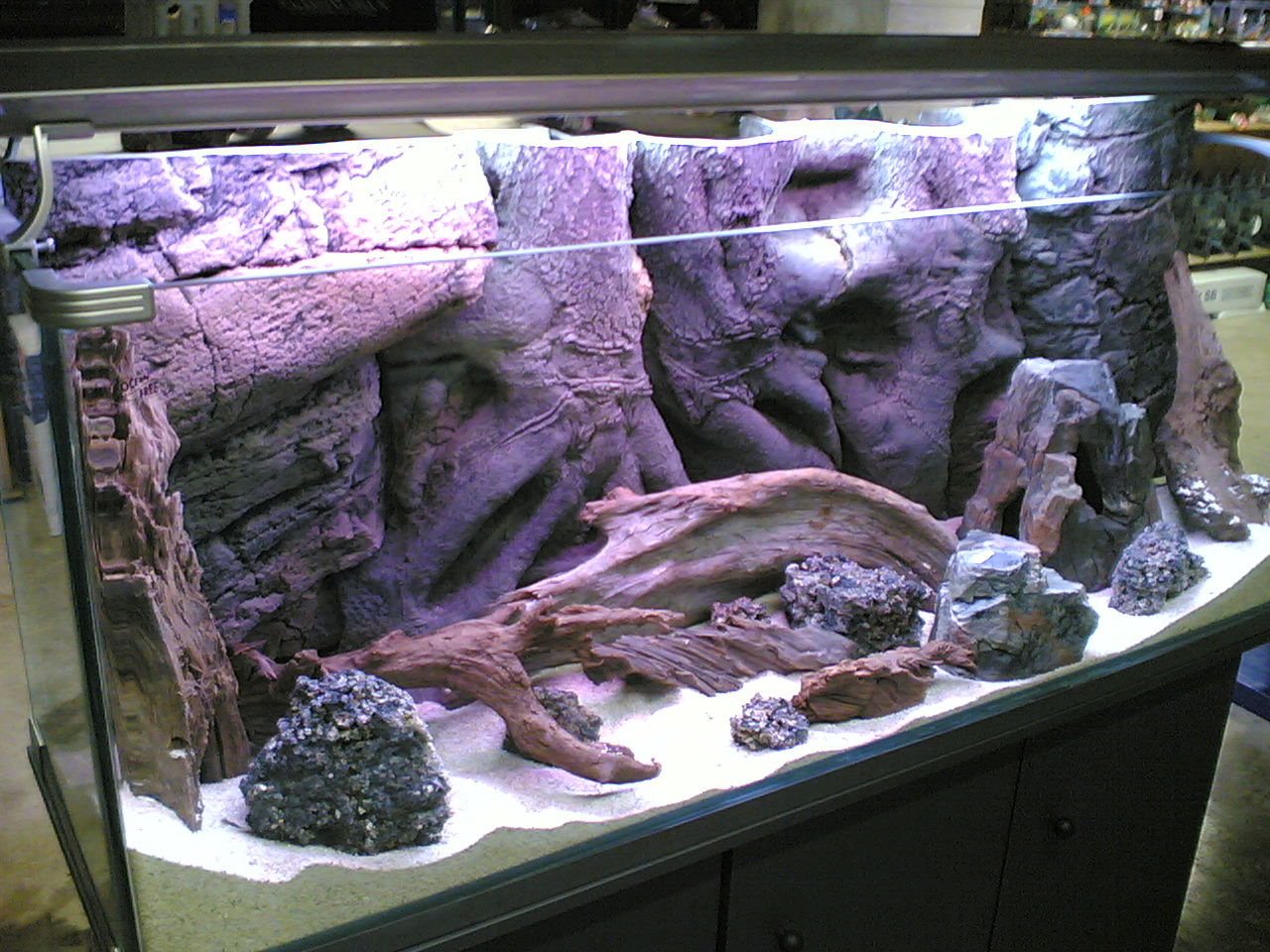 Cold Water Saltwater Aquarium 1000 Aquarium Ideas